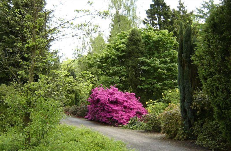arboretum_lądek.jpeg