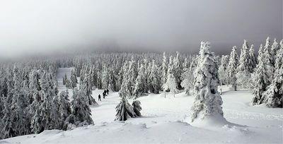 Rezerwat_przyrody_Śnieżnik_Kłodzkip.jpeg