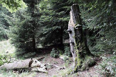 800px-Rezerwat_przyrody_Puszcza_Śnieżnej_Białki.jpeg